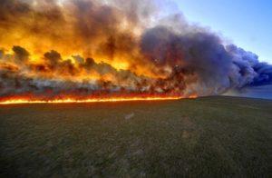 За один день спасатели ликвидировали 11 пожаров в экосистемах Запорожской области