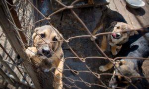 В Запорожье направят 10,5 миллионов гривен на стерилизацию и отлов бездомных животных