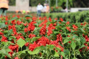 Запорожскую Аллею Боевой Славы украсят почти двадцать тысяч цветов - ФОТО