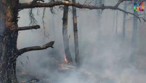 В Запорожской области неизвестные подожглилесопарковую зону - ВИДЕО