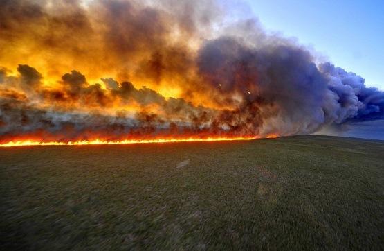 В Запорожской области пожары бьют все рекорды: за сутки произошло 84 пожара в природных экосистемах