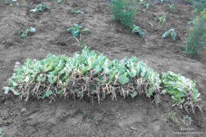 Жительница Запорожской области выращивала мак и устроила дома наркопритон - ФОТО