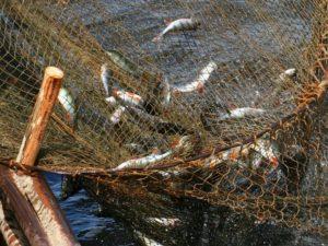 В Запорожской области скоро отменят запрет на вылов рыбы