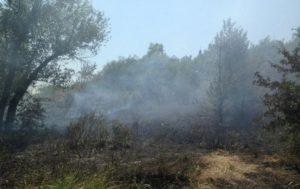 В Запорожье на Хортице задержали подростков, поджигавших сухую траву