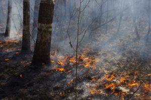 В Запорожской области огонь повредил более 16 гектаров открытых территорий