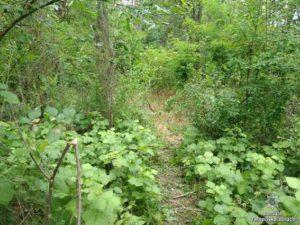 В Запорожской области произошло жестокое убийство: тело женщины нашли в лесополосе
