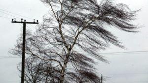 В центре Запорожья на проезжую часть упало дерево - ФОТО