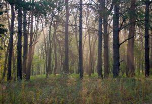 Экс-главу Запорожской райгосадминистрации будут судить за незаконное выделение 17 га леса на сумму 16 миллионов гривен