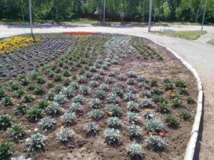В парке Победы вандалы разворовали цветы с клумбы - ФОТО