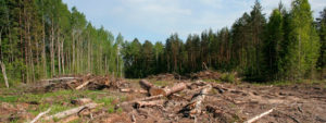 В Запорожской области за вырубку лесов нарушители заплатили 2700 гривен