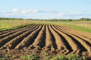 В Запорожской области неизвестные захватили 24 гектара земли и засеяли ее ячменем