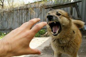 В Запорожской области на женщину напала стая бродячих собак