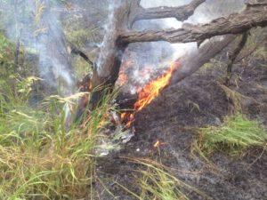 На выходных в Запорожье снова горела Хортица - ВИДЕО