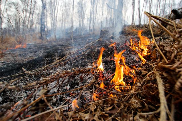 В Запорожской области за сутки произошло 12 пожаров в экосистемах