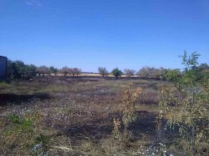В Запорожской области горела сухая трава - ФОТО