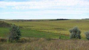 Житель Запорожской области самовольно занял участок земли площадью 34,5 гектара