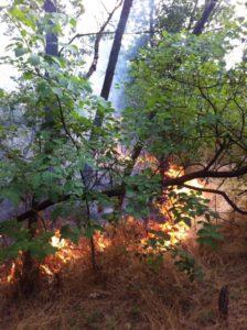 За сутки на Хортице охватило масштабным пламенем конюшню и балку Генералку – ФОТО