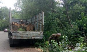В Запорожье лесники незаконно вырубали деревья - ФОТО