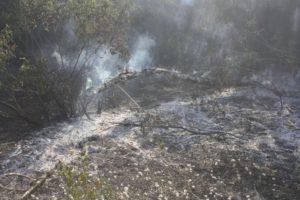 На Хортице снова произошел пожар - ФОТО