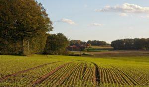 В Запорожской области незаконно использовали 47 гектаров земли
