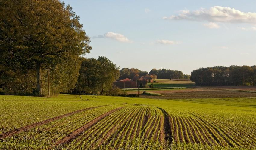 Запорожские аграрии пополнили местные бюджеты почти на 116 миллионов гривен