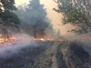 В Запорожской области горел лес - ФОТО