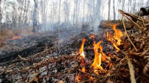 В Запорожской области огонь повредил почти 50 гектаров открытой местности: пожары тушили 280 спасателей