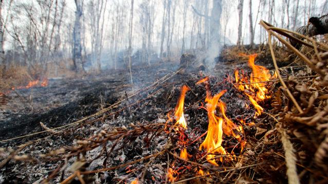 У Запорізькій області 42 рятувальника гасили пожежі в екосистемах