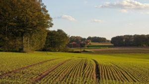 У Запорізькій області у фермерського господарства відібрали ділянки землі в 52 гектара