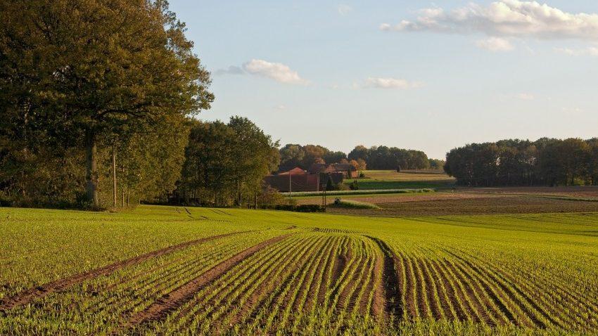 Прокуратура вимагає повернути в держвласність земельні ділянки вартістю понад 44 мільйонів гривень