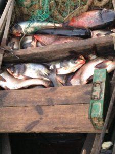 Рыбоохранный патруль поймал 160 браконьеров - ФОТО