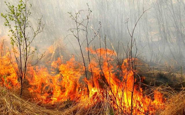 В Запорожской области горел лес: огнеборцы семь часов тушили пожар - ФОТО