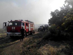 В Запорожской области на территории лесничества произошел масштабный пожар - ФОТО