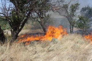 Запорожская область продолжает страдать от пожаров: за сутки произошло 49 случаев возгораний природных экосистем