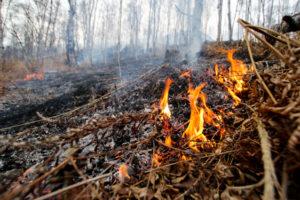 В Запорожской области жители частного сектора в жару палят траву и сухую листву