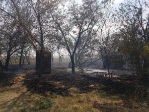 В Запорожской области в результате масштабного пожара дачники остались без домов и автомобилей - ФОТО