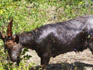 В Запорожской области на территории завода спасатели провели операцию по освобождению животного — ФОТО