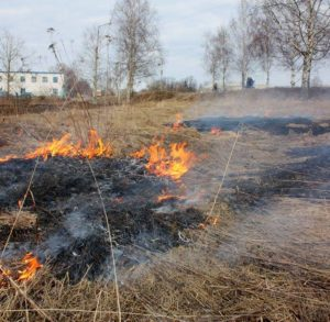 В Запорожской области пожары бьют все рекорды: за сутки произошло 117 случаев возгораний природных экосистем