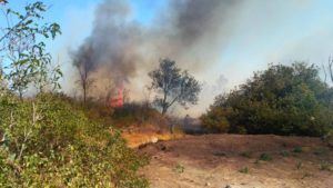 Запорожская область страдает от пожаров: за сутки произошло 103 случая возгорания природных экосистем