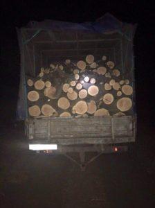 В Запорожской области поймали банду «черных лесорубов» - ФОТО