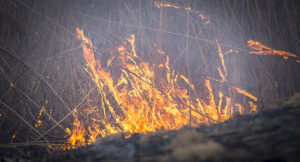 В Запорожской области на кладбище произошел пожар