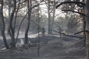 В Запорожье произошел лесной пожар на острове Хортица - ФОТО