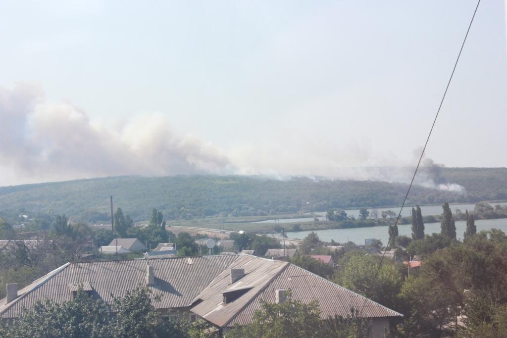 В Запорожской области спасатели 4 часа тушили пожар на территории лесничества - ФОТО