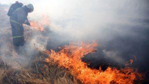 Запорожская область страдает от многочисленных пожаров: за сутки спасатели ликвидировали 73 пожара в природных экосистемах