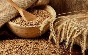 В Запорожской области селяне украли зерна на 150 тысяч гривен - ФОТО