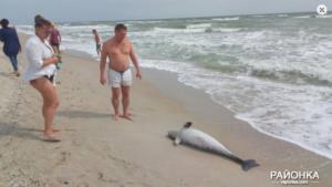 В Запорожской области мертвого дельфина снова выбросило на берег - ФОТО
