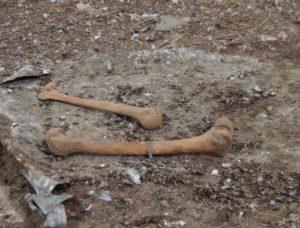 В Запорожской области для клумбы привезли землю с человеческими останками