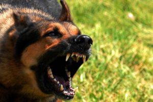 В Запорожской области собака покусала первоклассницу: через несколько дней животное погибло