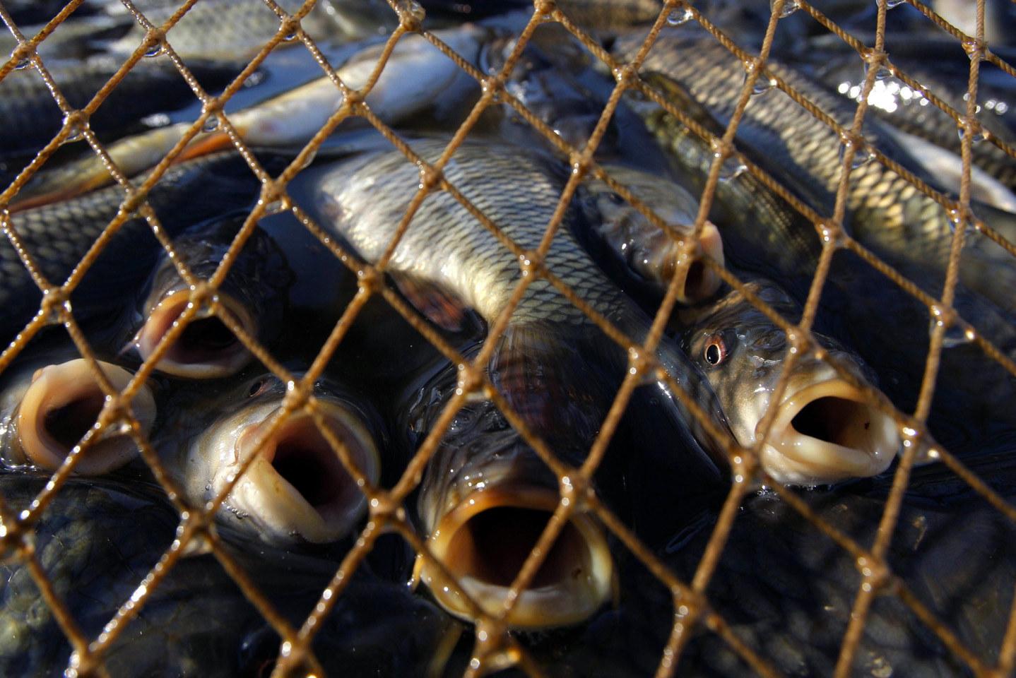 Рыбпатруль поймал браконьеров с уловом почти на 20 тысяч гривен - ФОТО