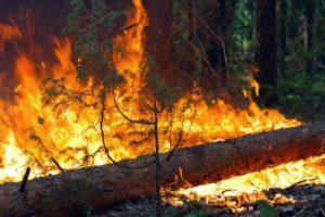 За сутки 95 спасателей ликвидировали пожары в экосистемах